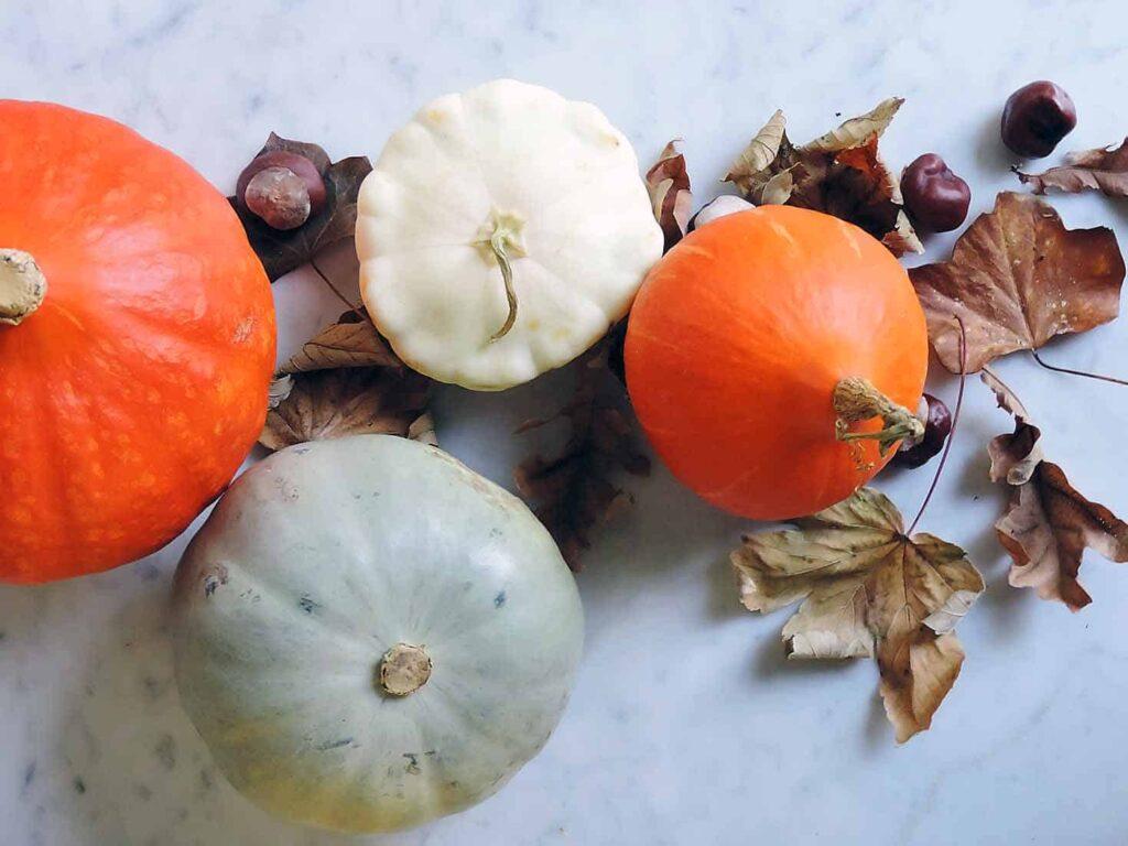 squash-variety-fall