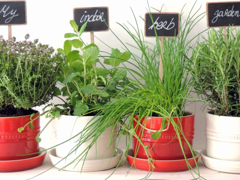 Tips on growing an indoor herb garden and preserving them