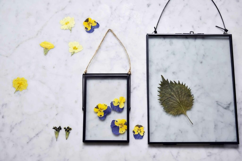 How to press flowers and frame them?